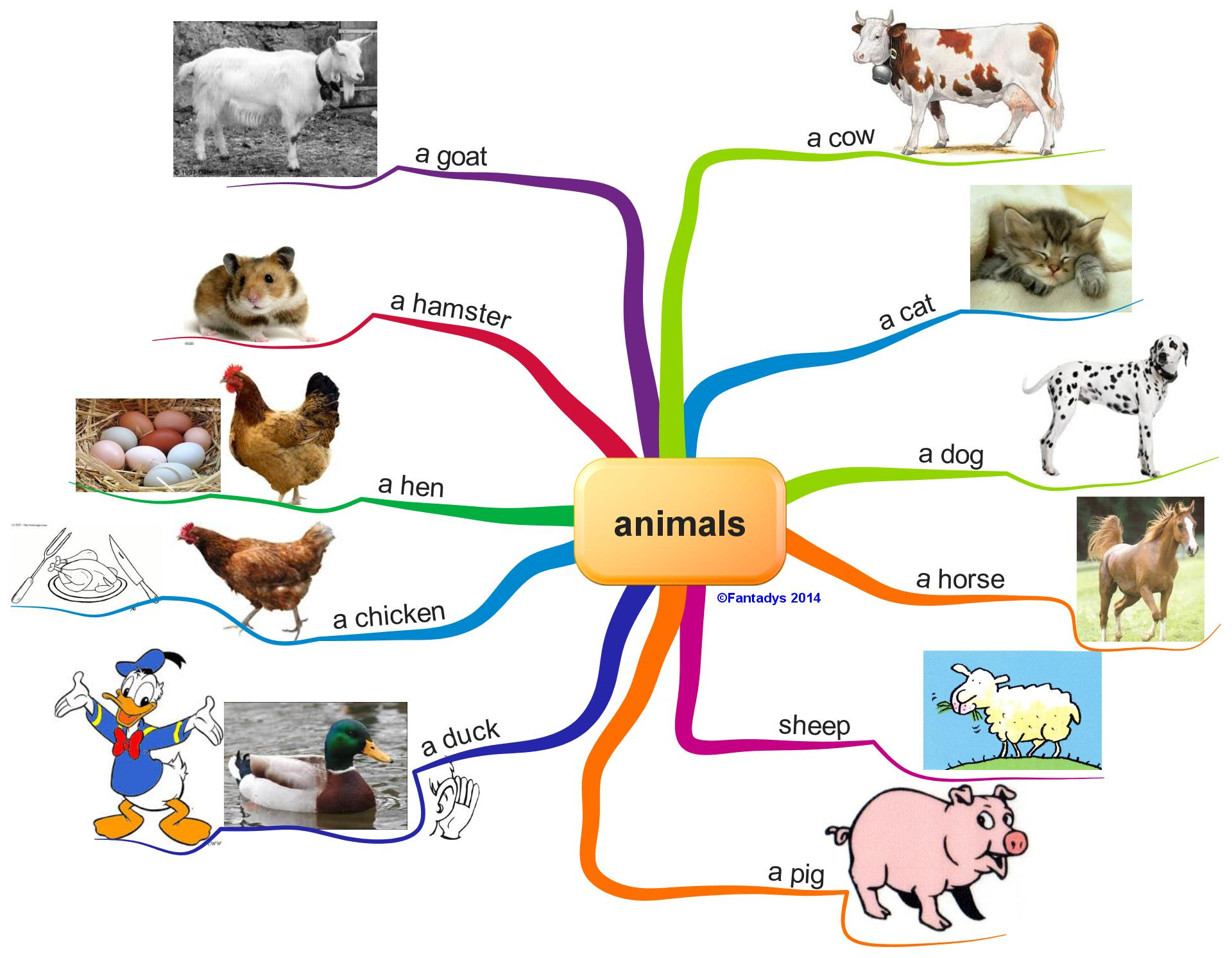 english time   animals