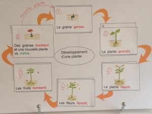 plante cycle 1