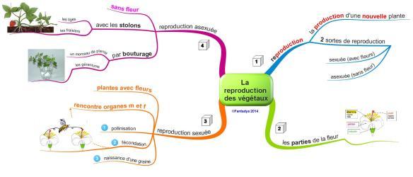 La reproduction  des végétauxF