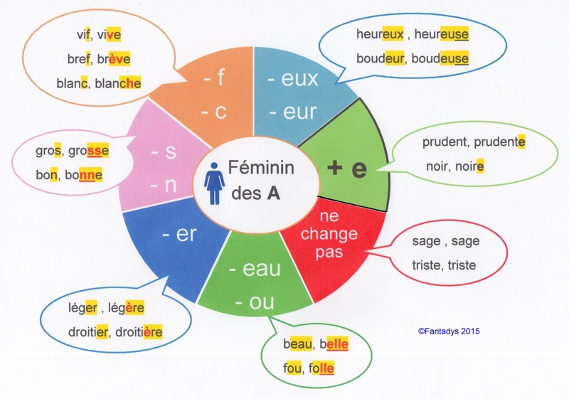 les adjectifs   au f u00e9minin et au pluriel